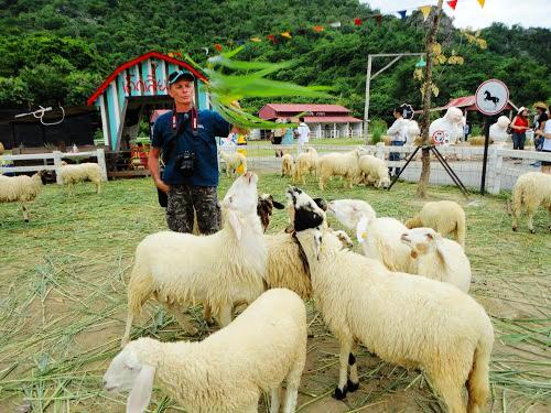 Hua_Hin_Swiss_Sheep_Farm