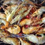 曼谷炭烧海鲜自助餐 Bangkok BBQ Seafood Buffet