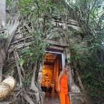 树中庙(Wat Bang Kung)