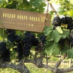 华欣葡萄园酒庄 (Hua Hin Hills Vineyard)